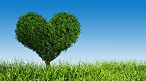 Обои Трава Сердце Деревья Природа картинки