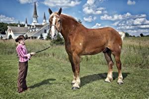 Обои Лошади Трава Животные Девушки картинки