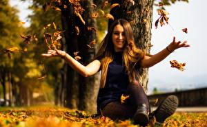 Обои Осень Сидит Листья Девушки картинки