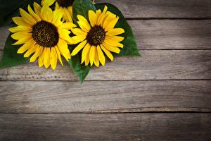 Обои Подсолнухи Доски Двое Шаблон поздравительной открытки Цветы фото