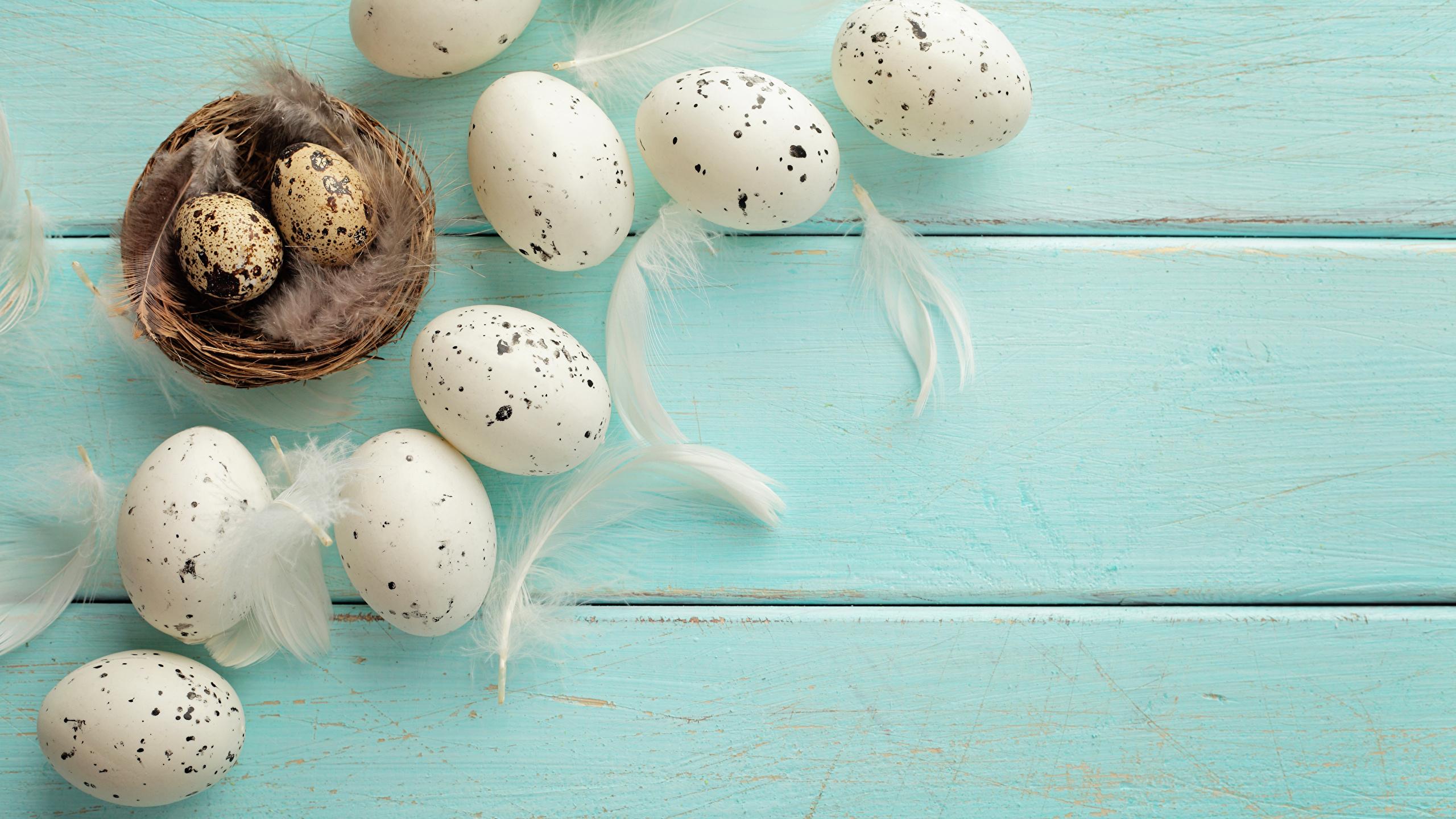 Обои перо, яйца. Разное foto 6