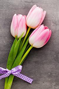 Картинки Тюльпаны Втроем Цветы