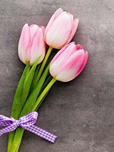 Картинки Тюльпаны Трое 3 Цветы