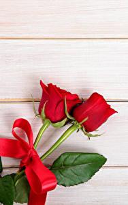 Фотография Роза Доски Двое Красный Бантик Шаблон поздравительной открытки Цветы