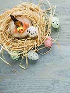 Фото Праздники Пасха Птицы Доски Гнездо Яйца