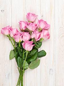 Картинки Розы Розовый Цветы