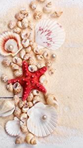 Картинка Ракушки Морские звезды Жемчуг Песок Доски