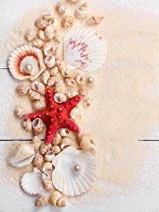 Картинка Ракушки Морские звезды Жемчуг Песка Доски