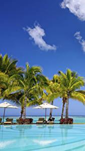 Фотография Небо Тропики Курорты Бассейны Пальмы Природа