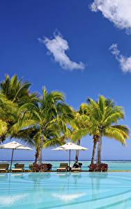 Фотография Небо Тропический Курорты Бассейны Пальмы Природа
