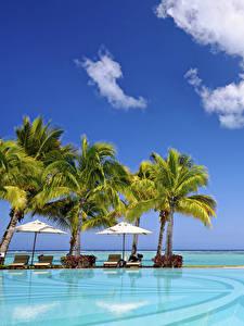 Фотография Небо Тропический Курорты Бассейны Пальмы