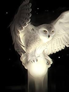 Фото Совообразные Крылья Белых Черный фон животное
