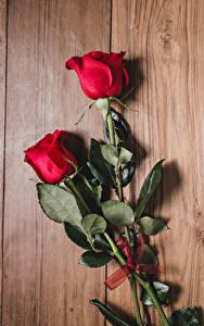 Картинка Розы Доски Красный Двое Цветы