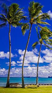 Фотографии Тропики Берег Небо Штаты Гавайи Пальмы Облака Природа