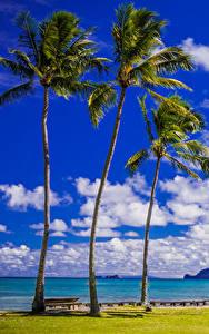 Фотографии Тропики Берег Небо Штаты Гавайи Пальмы Облака