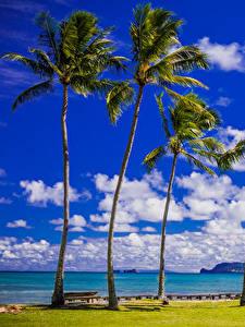 Фотографии Тропический Берег Небо Штаты Гавайи Пальм Облачно