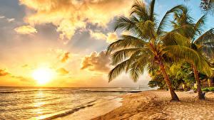 Фотография Тропики Побережье Рассветы и закаты Небо Пальмы Облака Barbados Caribbean