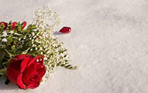 Картинка Розы Красный