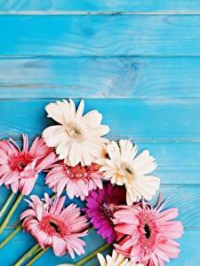 Картинки Герберы Доски Шаблон поздравительной открытки Цветы