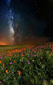 Фотографии Маки Небо Звезды Поля Ночь Природа