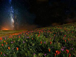 Фотографии Мак Небо Звезды Поля Ночь Природа