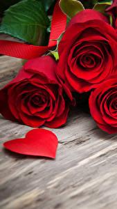 Фотографии Роза Доски Красный Сердце Цветы