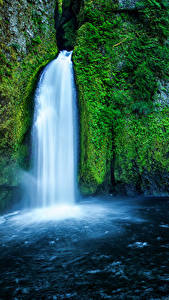 Картинка США Водопады Мха Скала Wahclella Falls Oregon Природа