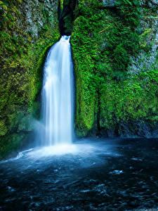 Картинка США Водопады Мох Скала Wahclella Falls Oregon Природа