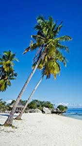 Фото Филиппины Тропики Побережье Пальмы Песок Пляж