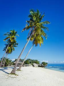 Фото Филиппины Тропики Побережье Пальма Песке Пляжи