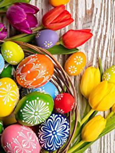 Фото Праздники Пасха Тюльпан Доски Яйцами цветок
