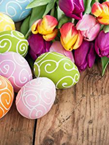 Фото Праздники Пасха Тюльпаны Доски Яйцами Цветы