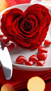 Обои День всех влюблённых Розы Крупным планом Красная Сердце Тарелка Цветы
