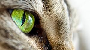 Фото Кот Макро Глаза Крупным планом животное