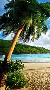 Картинки Тропики Море Пейзаж Пальмы Пляж Природа