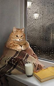 Фотографии Креативные Кошки Молоко Стакан Книги Окно Капля Смешные Животные