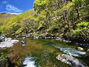 Фото Великобритания Парки Реки Деревья Exmoor National Park Природа