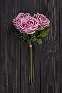 Картинка Розы Розовый Трое 3 Доски