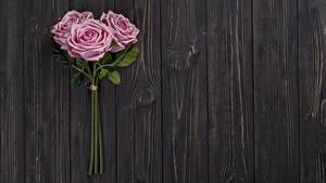 Обои для рабочего стола Розы Розовый Трое 3 Доски Цветы