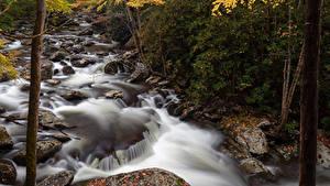 Картинка США Парки Леса Речка Камни Осенние Great Smoky Mountain National Park Природа