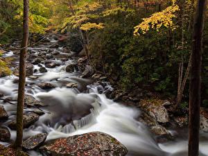Картинка США Парки Леса Речка Камни Осенние Great Smoky Mountain National Park