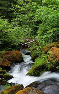 Фото США Водопады Камень Мхом Ручеек North Umpqua River Oregon Природа