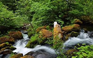 Фото США Водопады Камень Мох Ручей North Umpqua River Oregon Природа