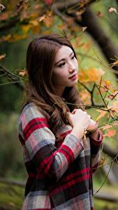 Обои Осенние Азиаты Ветки Шатенки молодая женщина