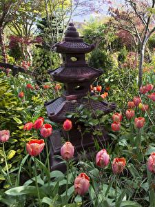 Картинка Англия Сады Тюльпаны Walsall Garden Природа