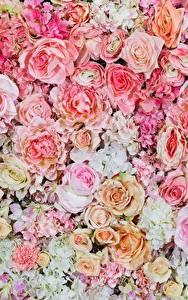 Обои для рабочего стола Розы Текстура Рисованные Розовые Цветы
