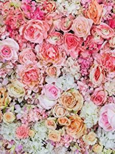 Обои Розы Текстура Рисованные Розовые Цветы