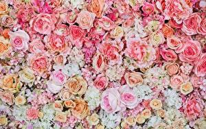 Обои Розы Текстура Рисованные Розовые