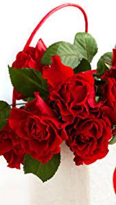 Картинки Розы Вблизи Красные Цветы