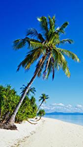 Картинка Филиппины Тропики Побережье Море Пальмы Пляж